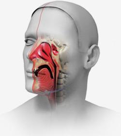Симптомы медикаментозного ринита